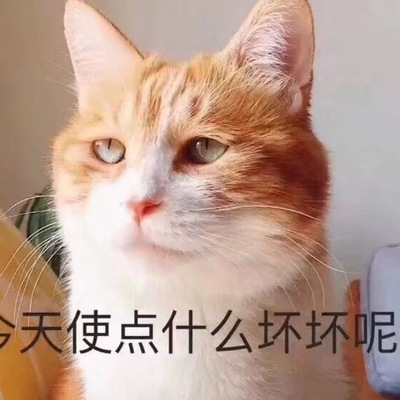 siqihui@mao.mastodonhub.com