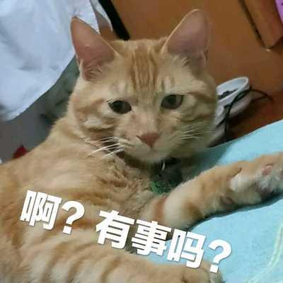 hejianyunsheng@mao.mastodonhub.com